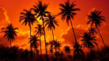 Palm Tree Sunset wallpaper pc