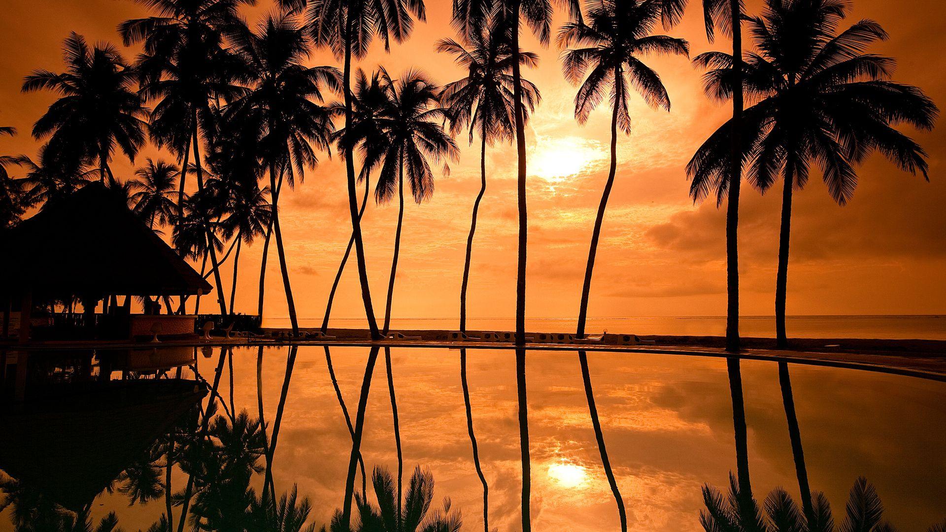 Palm Tree Sunset wallpaper pc