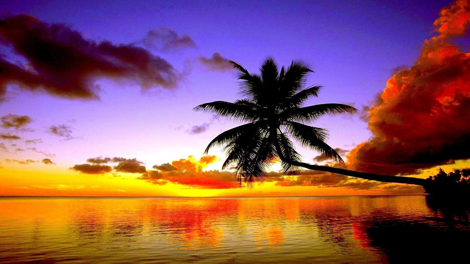 Palm Tree Sunset image