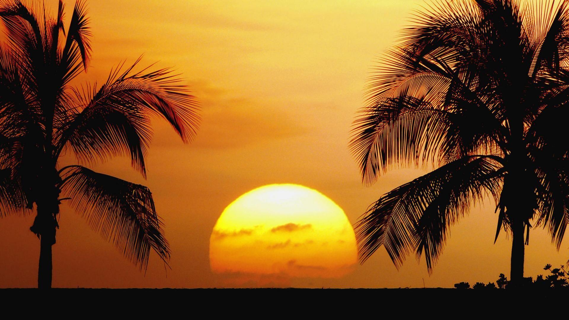 Palm Tree Sunset good background