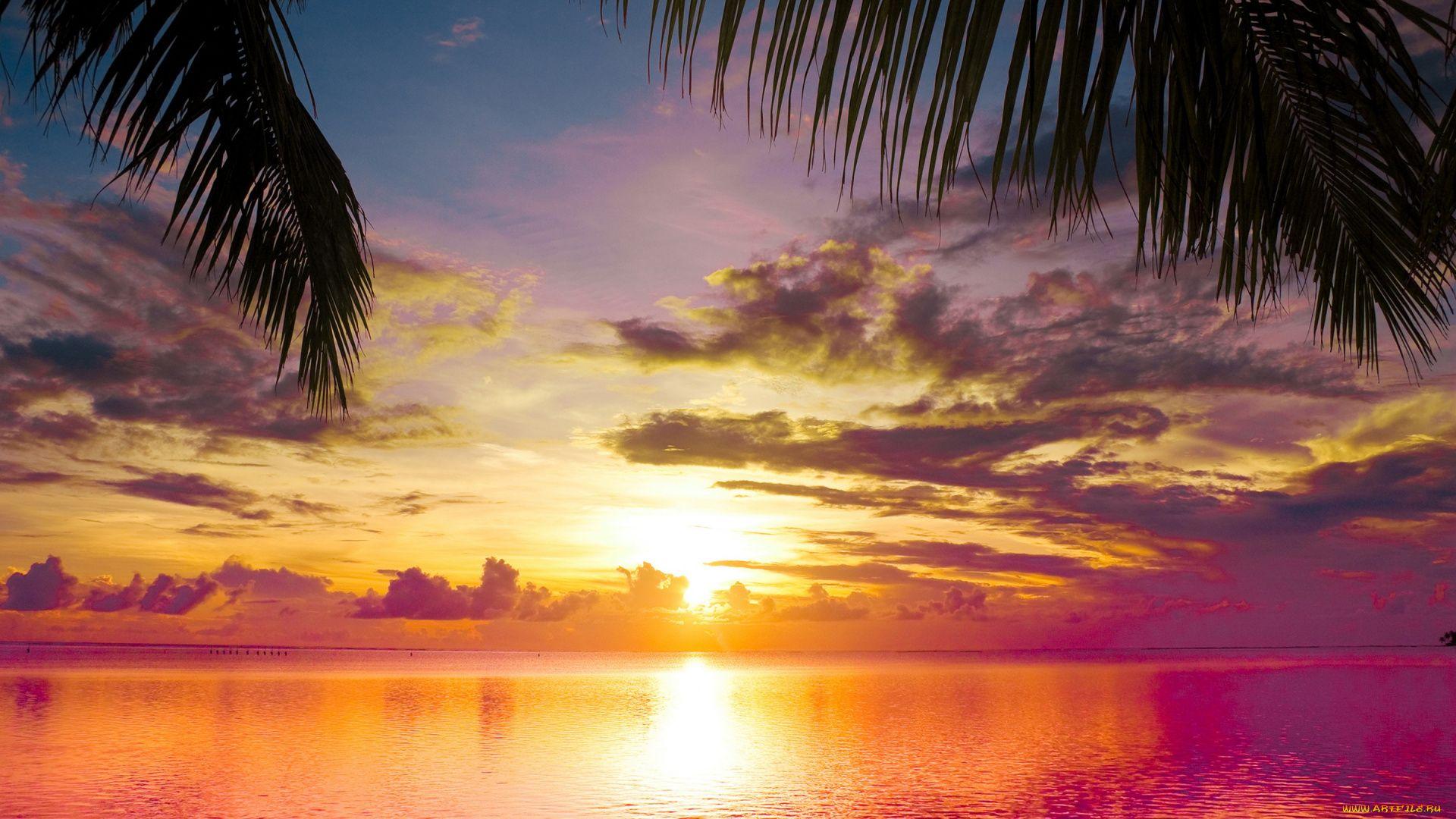 Palm Tree Sunset desktop background free