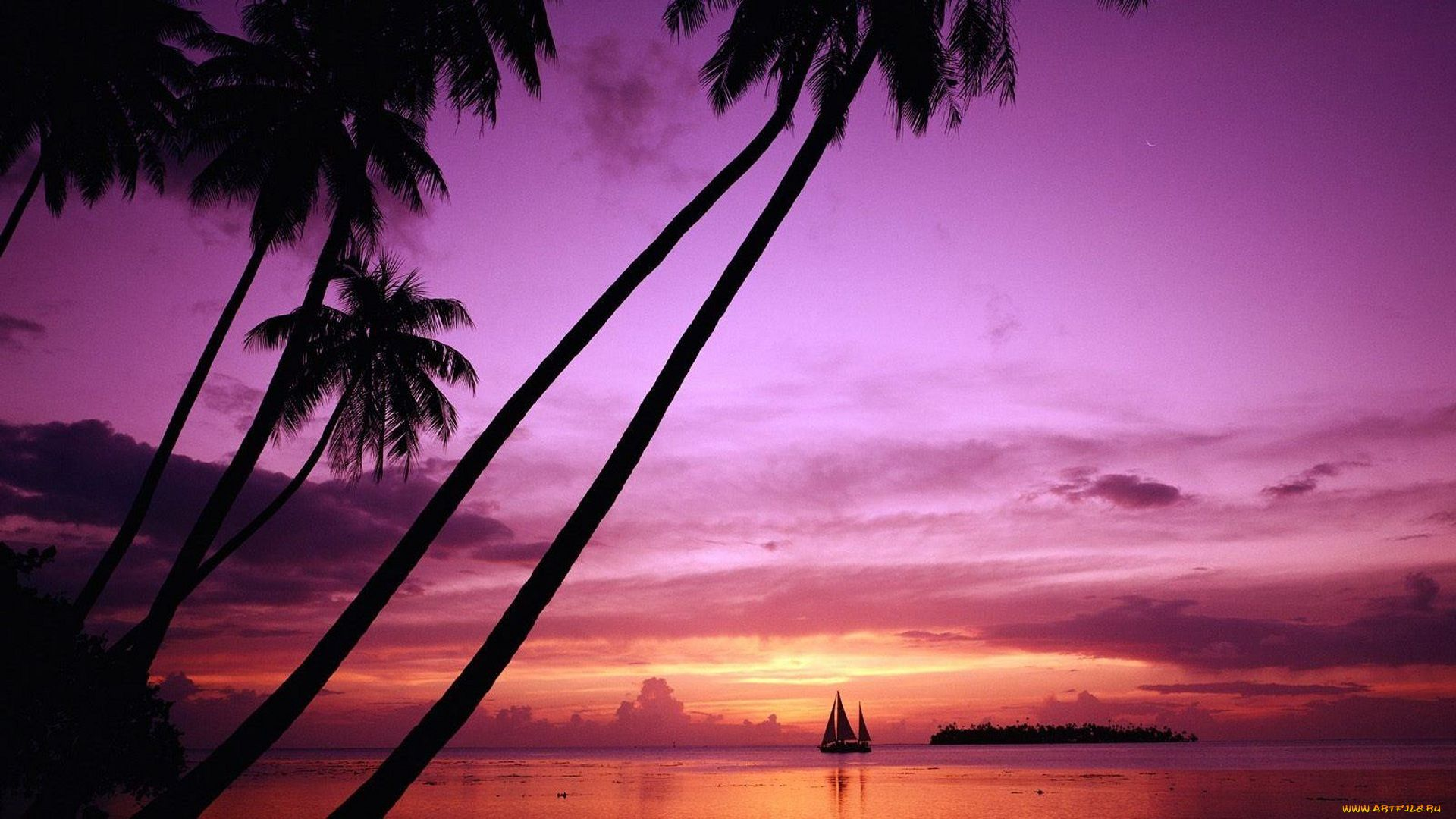 Palm Tree Sunset laptop background wallpaper