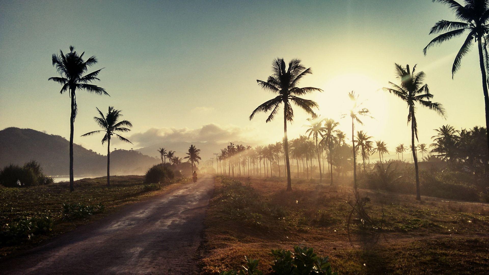 Palm Tree Sunset full hd image