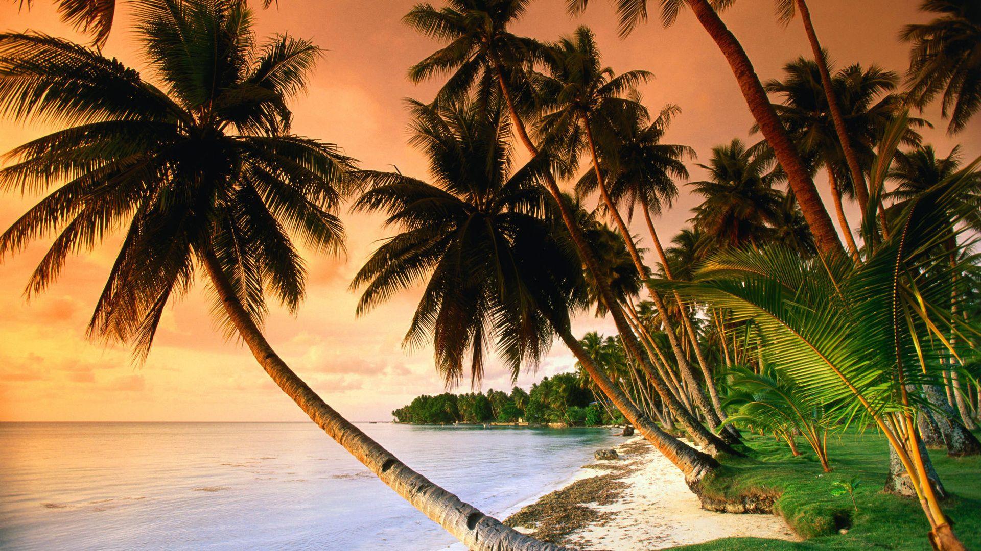 Palm Tree Sunset hd