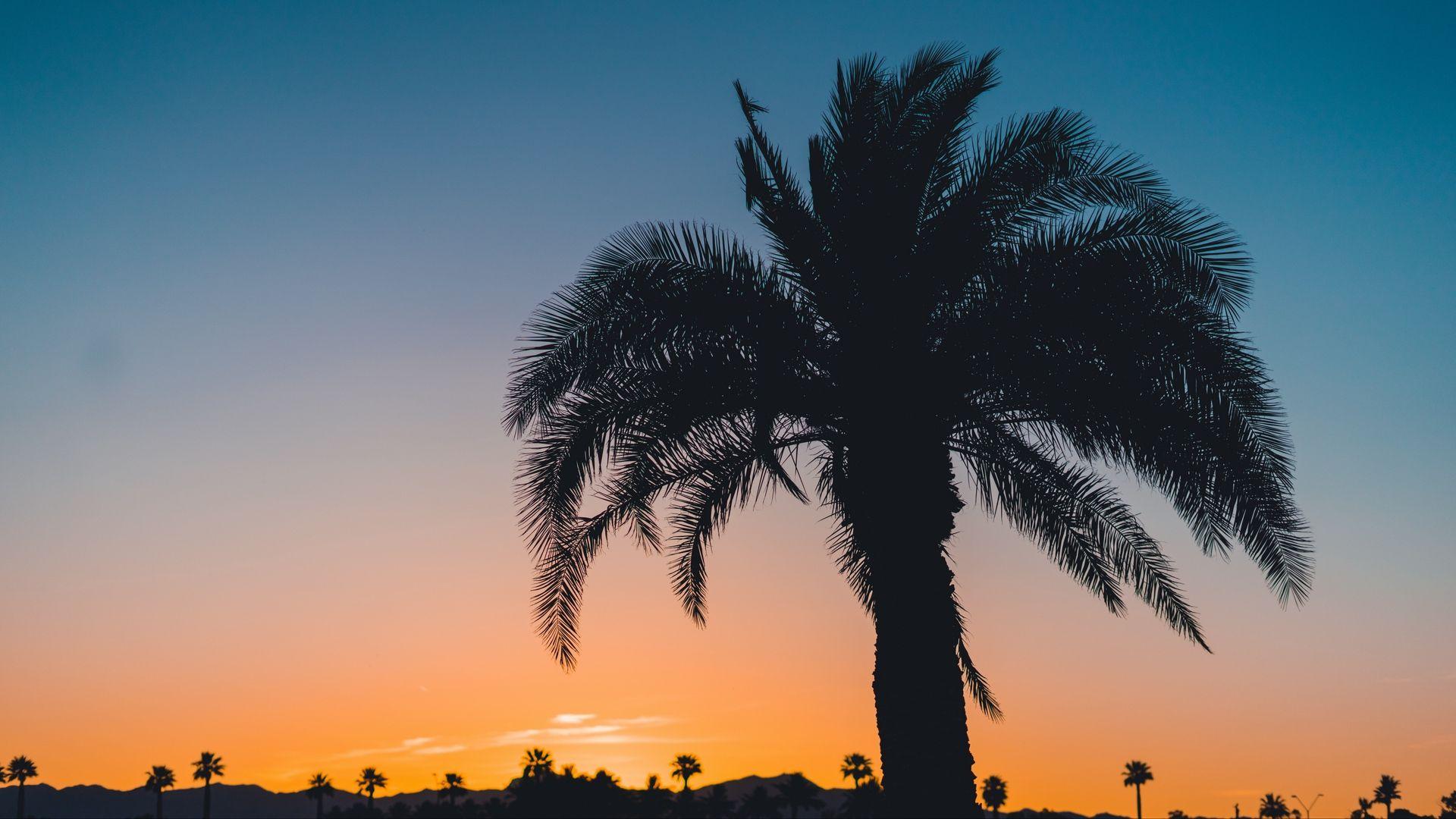 Palm Tree Sunset nice wallpaper