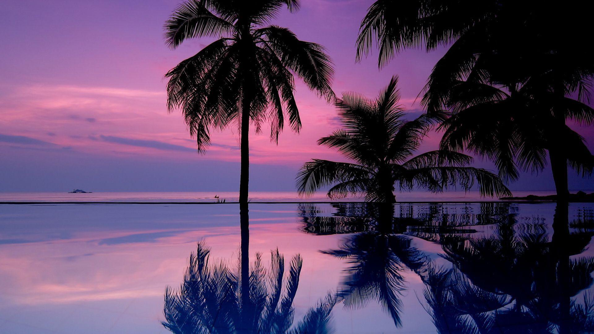 Palm Tree Sunset wallpaper hd