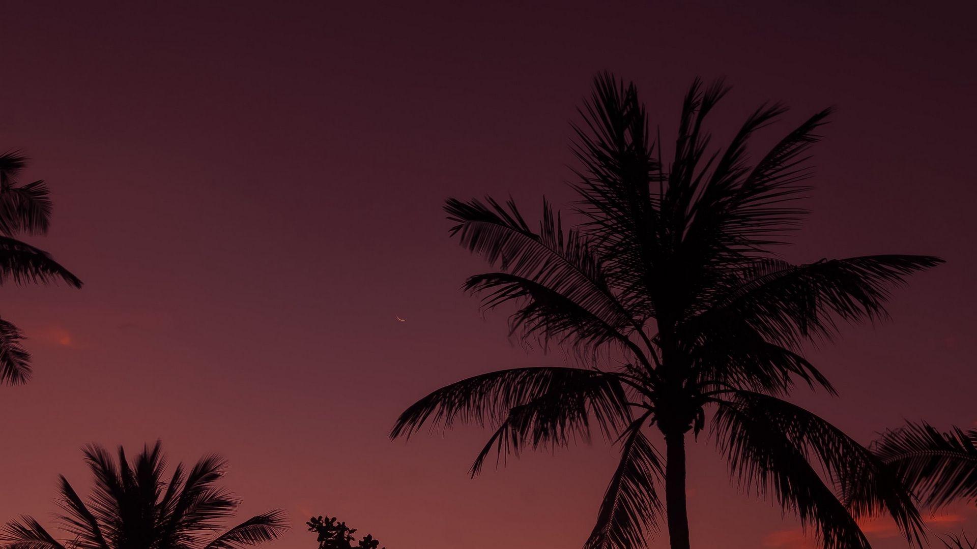 Palm Tree Sunset laptop background