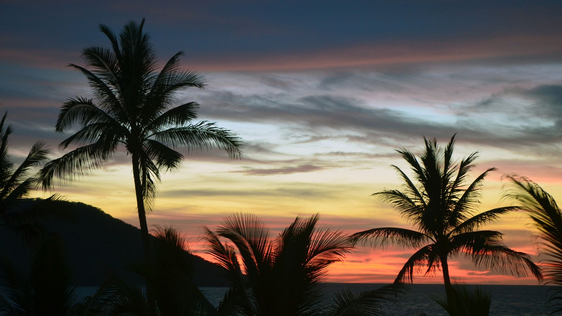 Palm Tree Sunset wallpaper picture