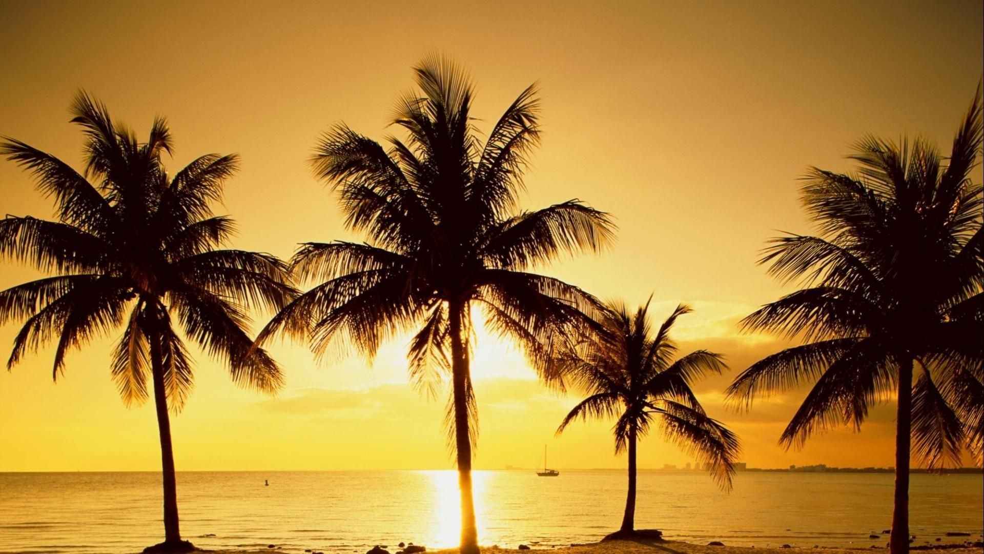 Palm Tree Sunset hd desktop