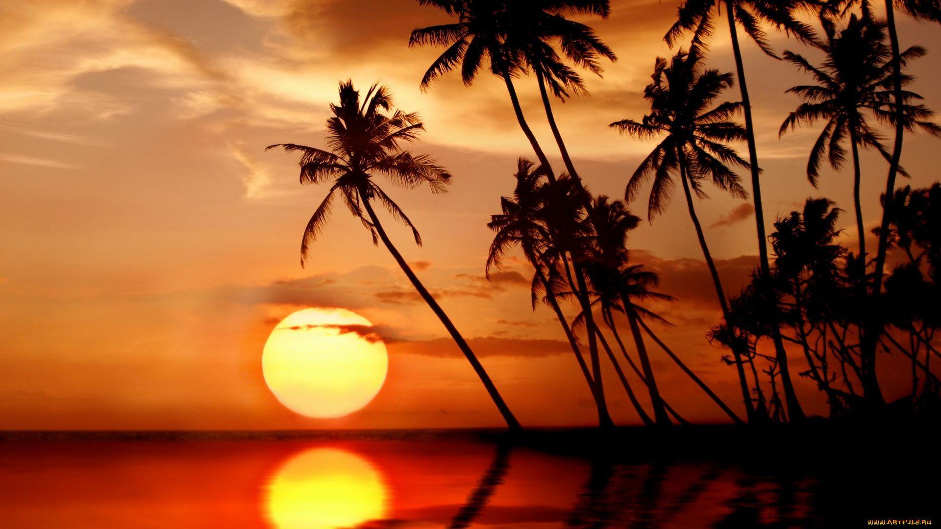 Palm Tree Sunset desktop background