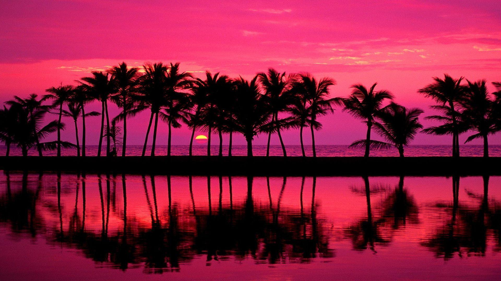 Palm Tree Sunset computer wallpaper