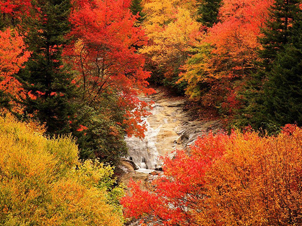 Photo Autumn Nature