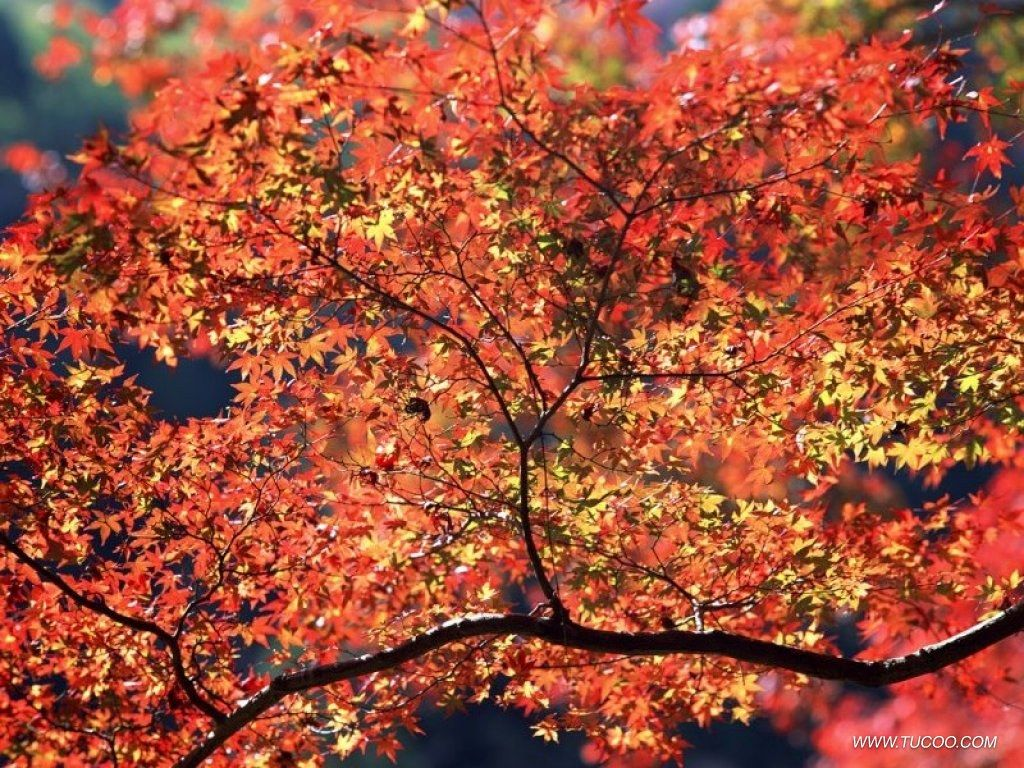 Photos On Desktop Wallpaper Autumn