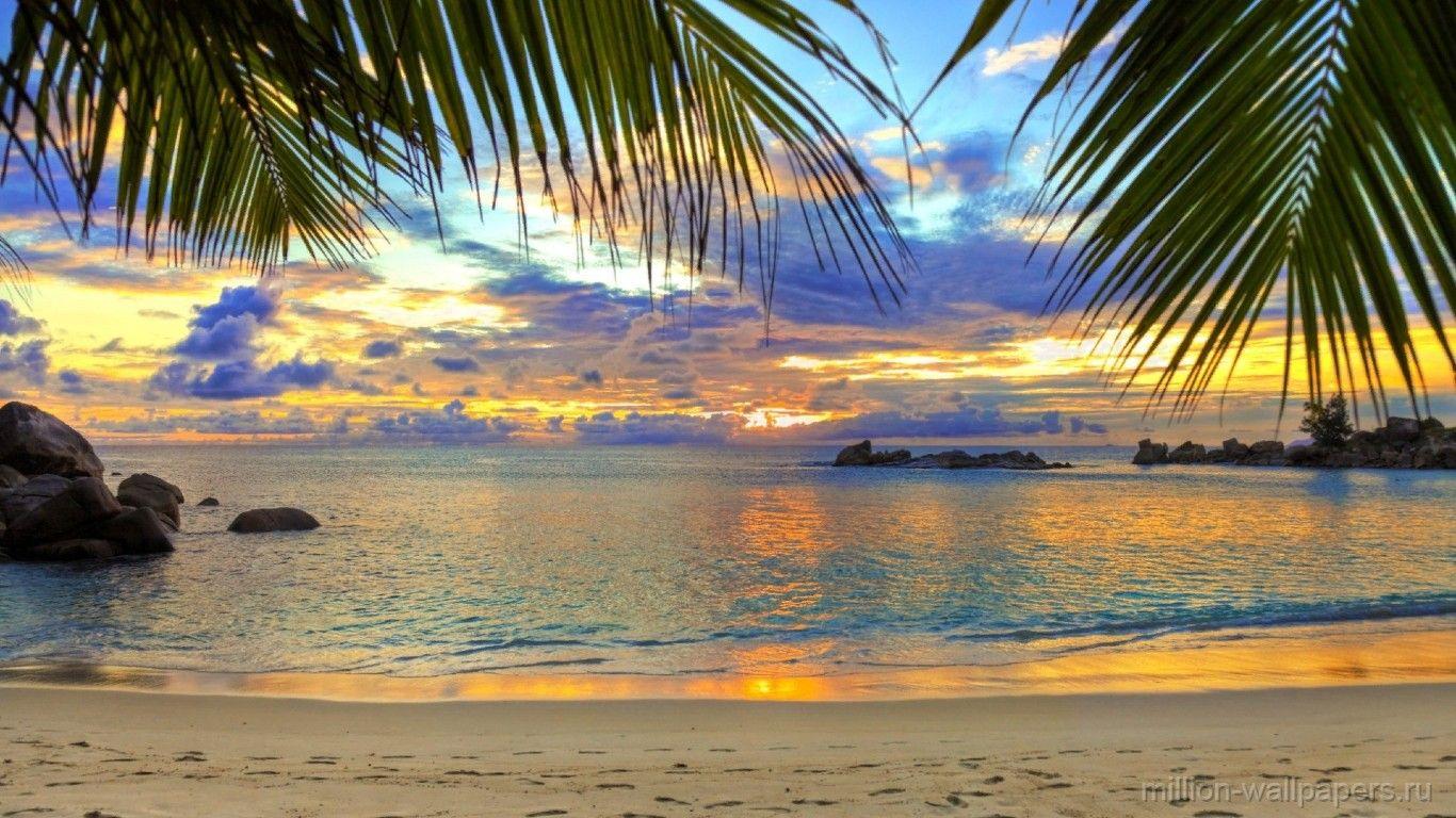 Sea Beach Palm Trees