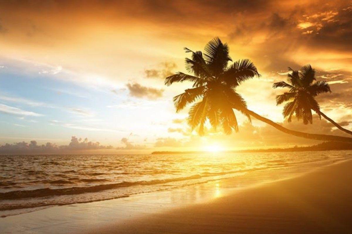Sea Beach Palms Sun