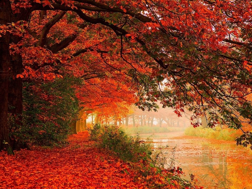 The Wallpapers Hd 1920x1080 Autumn