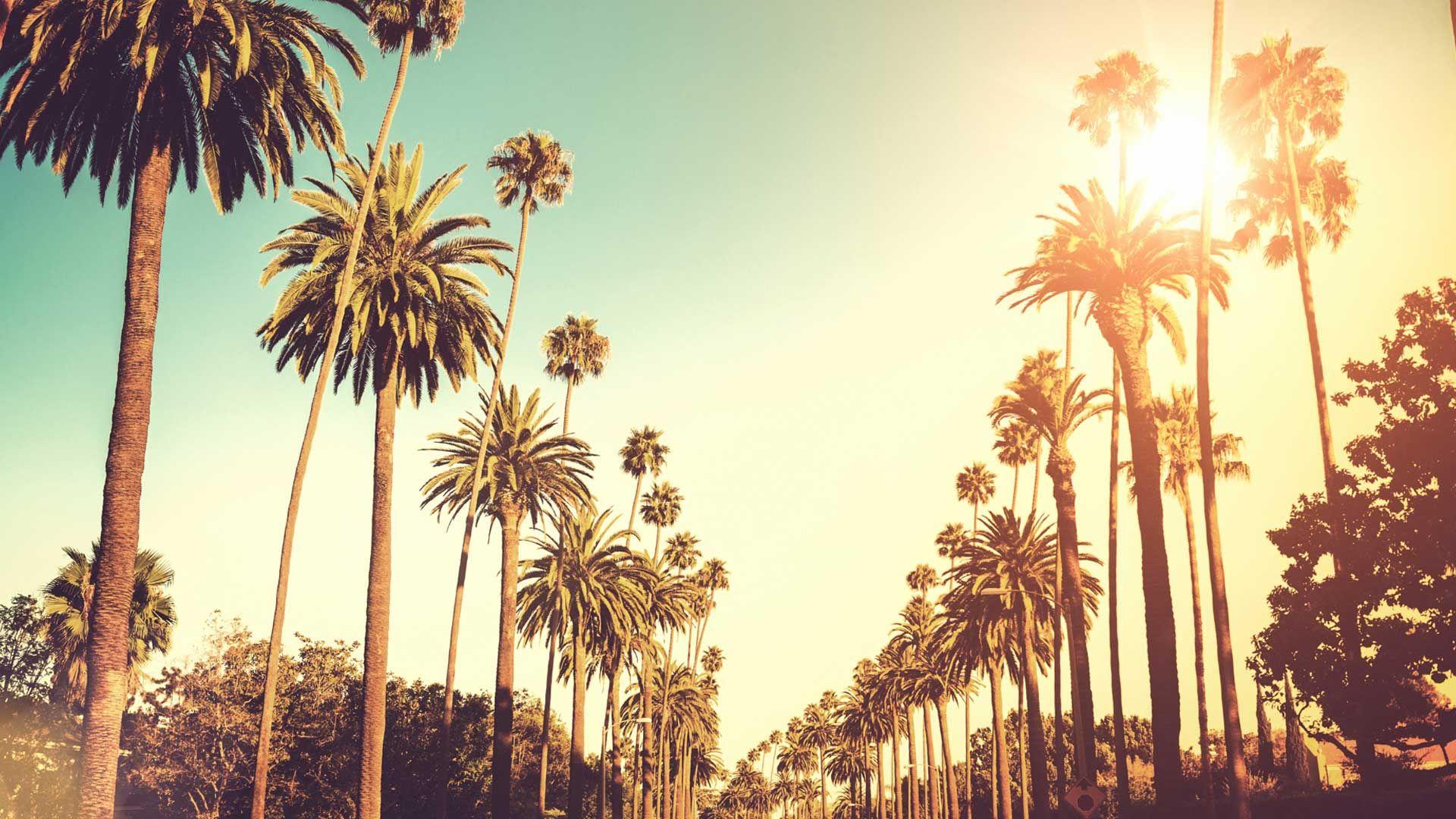 Beverly Hills Download Wallpaper