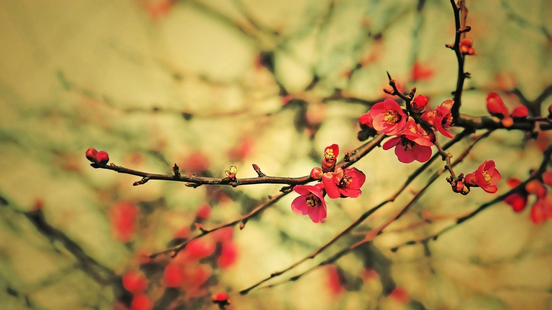 Cute Spring background image