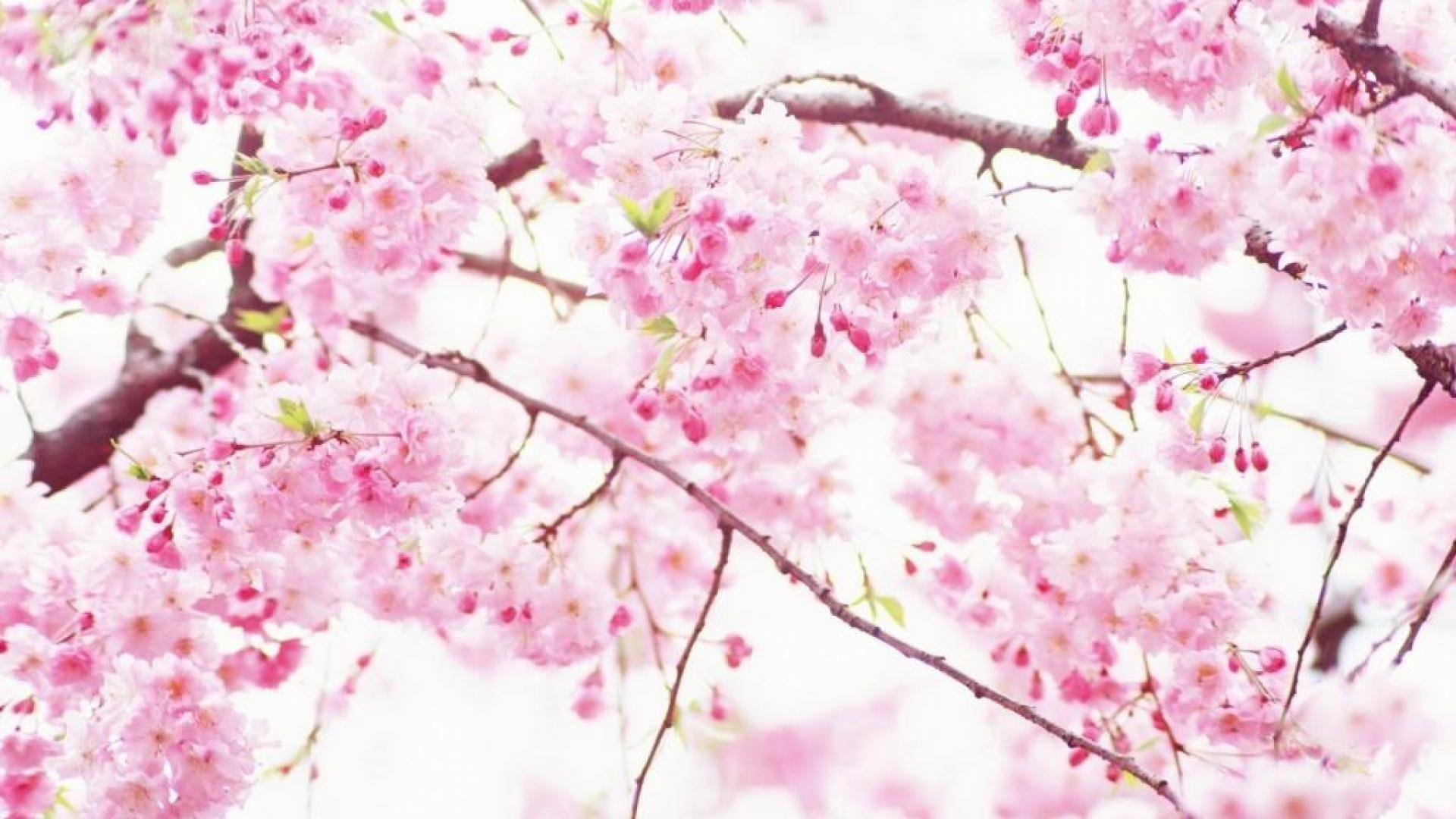 Cute Spring hd