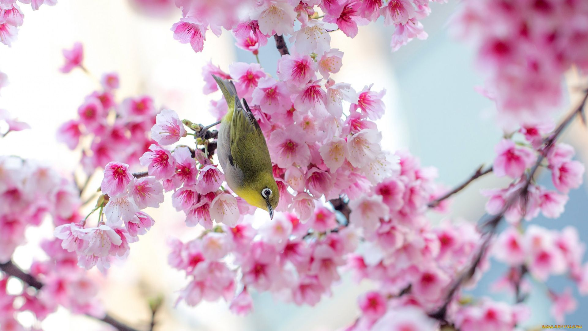 Cute Spring picture free download