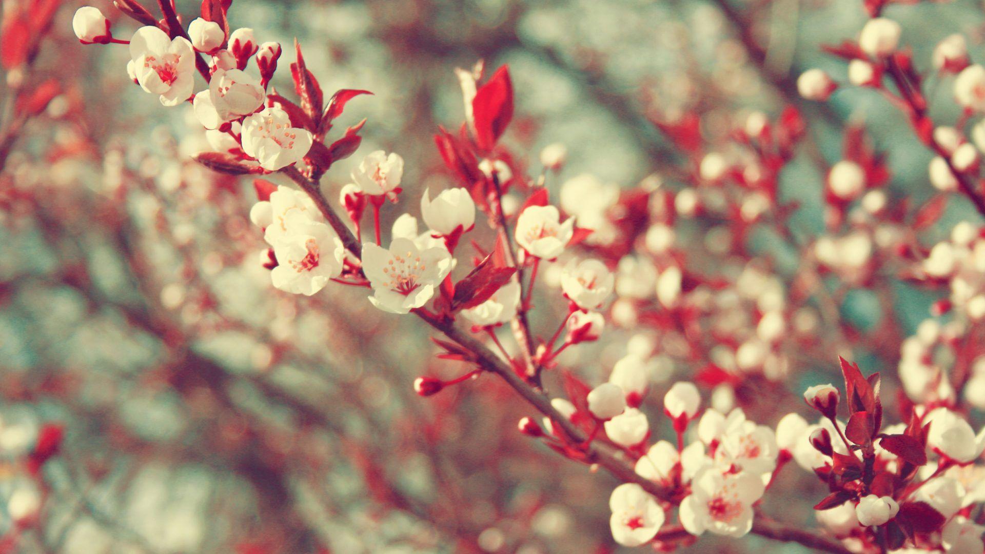 Cute Spring hd desktop