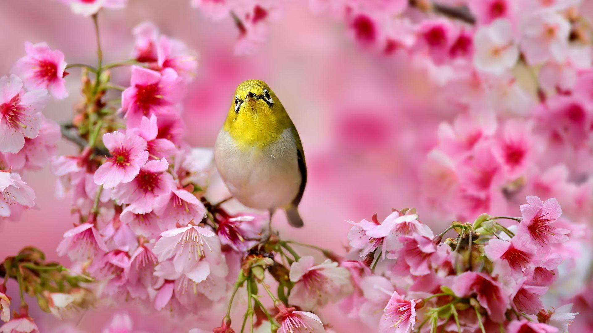 Cute Spring free