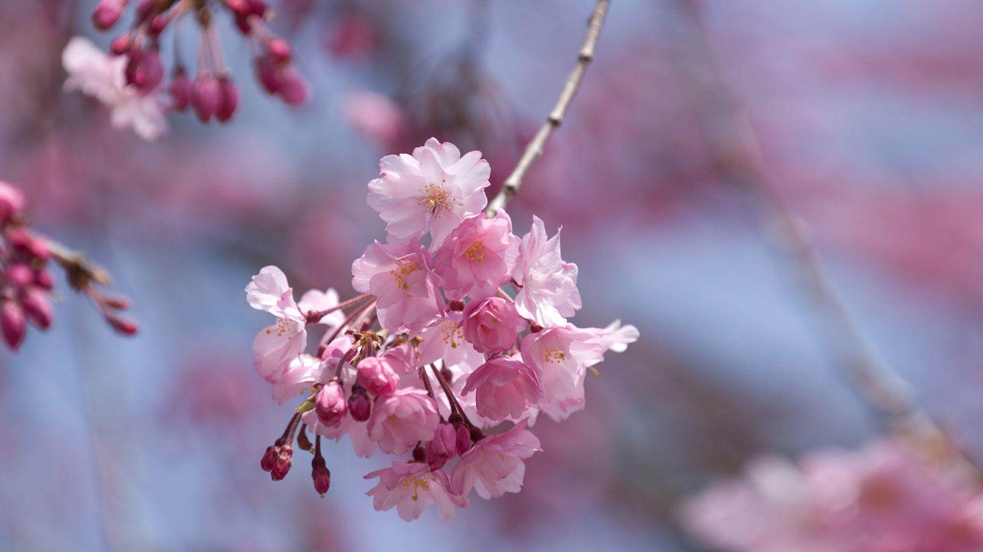 Cute Spring 1080p wallpaper