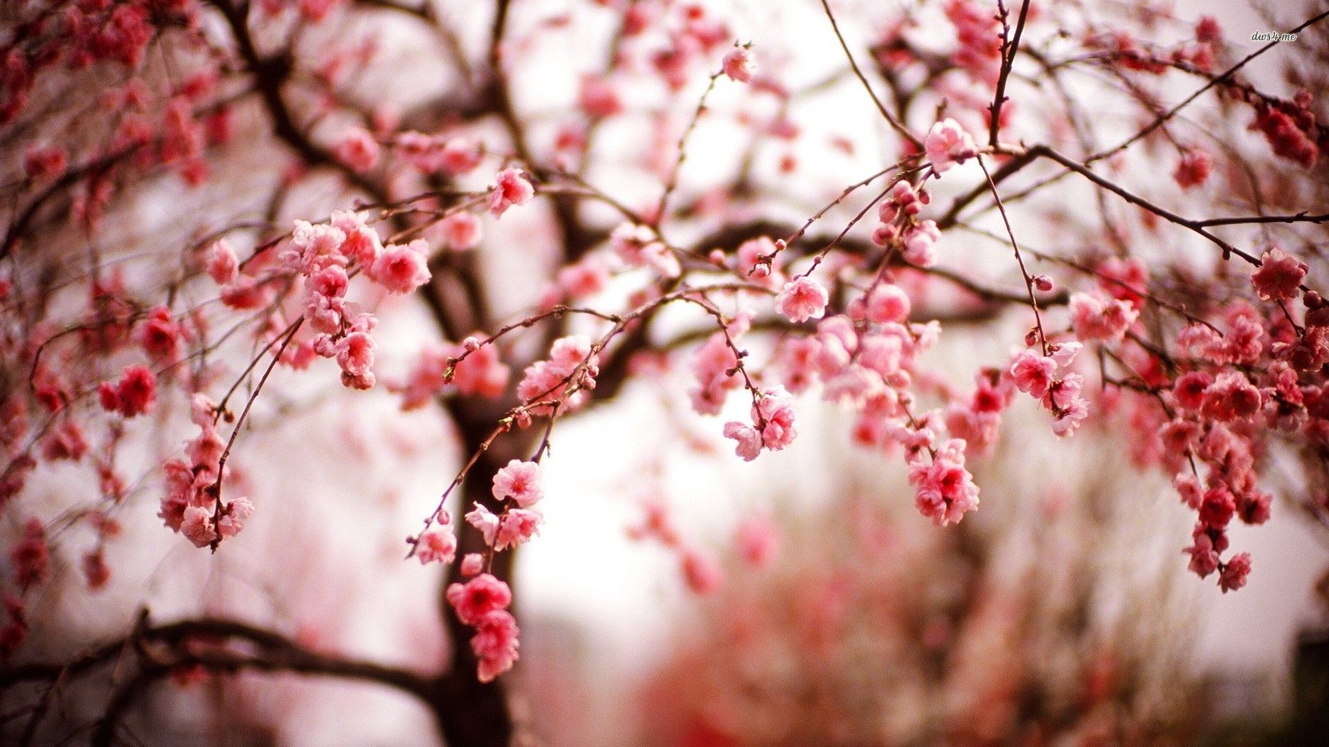 Cute Spring wallpaper background