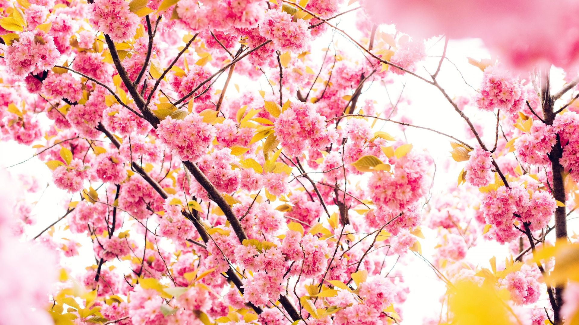 Cute Spring picture image