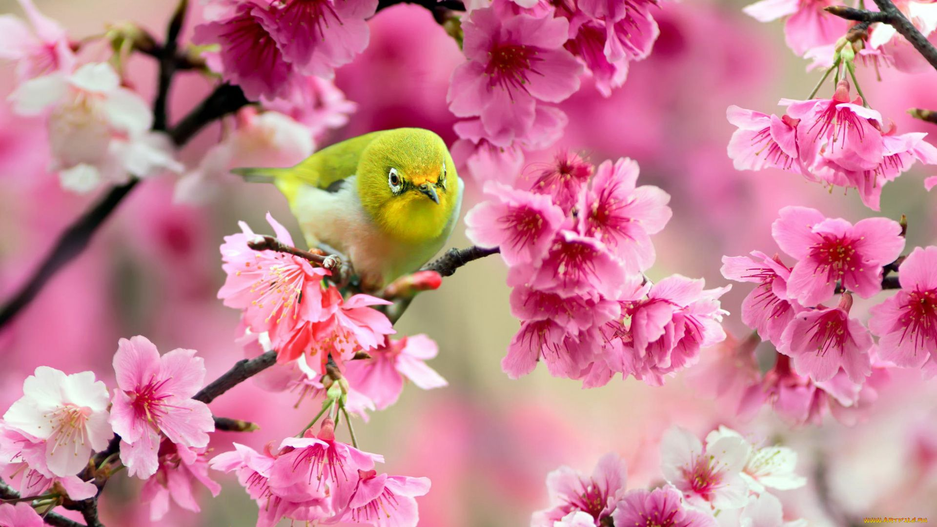 Cute Spring wallpaper for pc