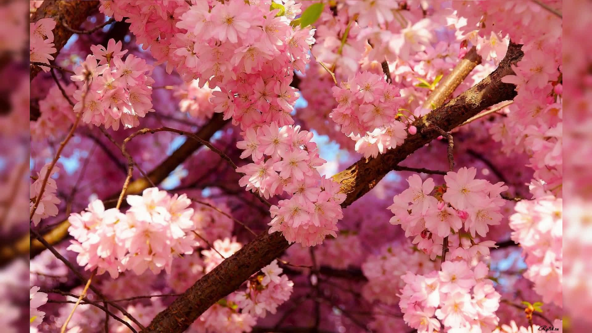 Cute Spring background picture hd