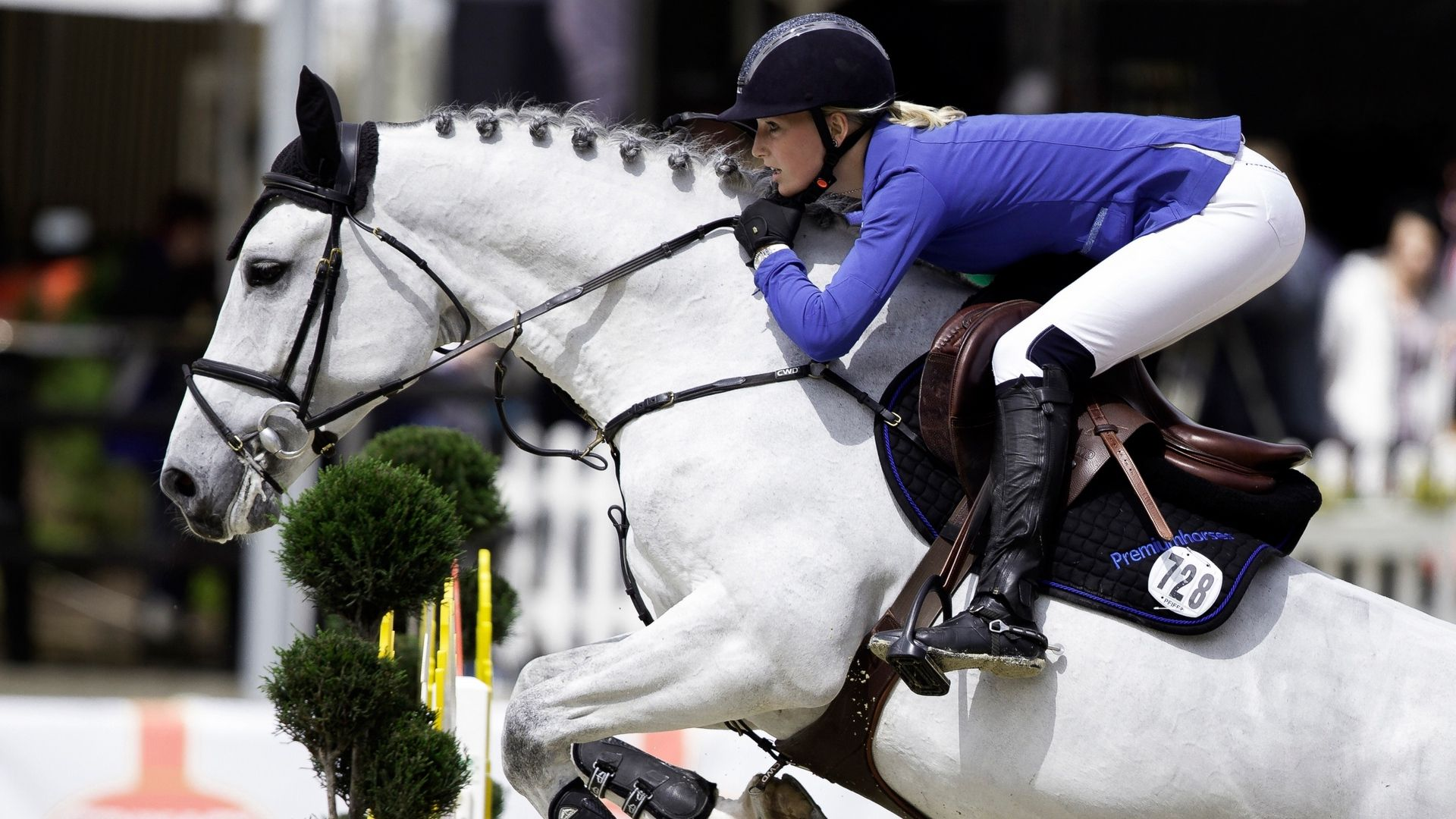 Equestrian hd wallpaper 1080