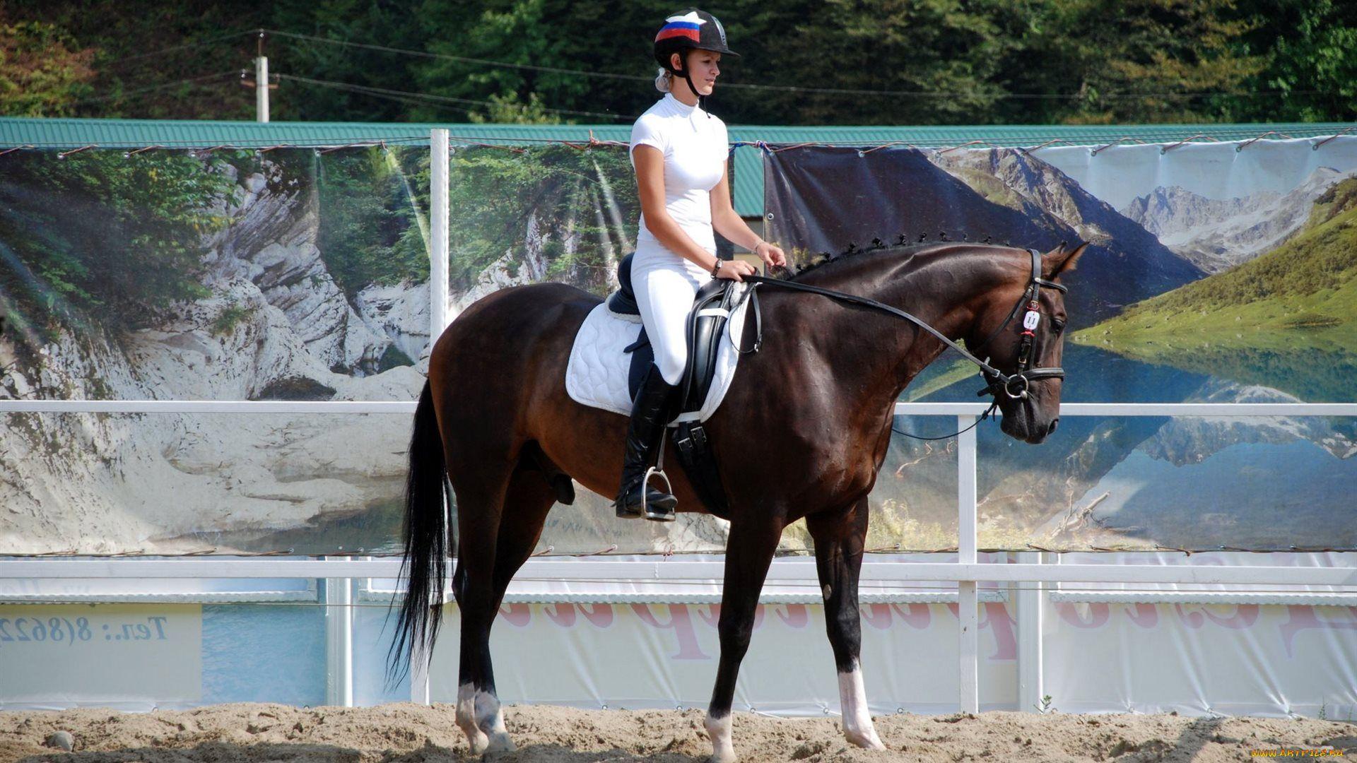 Equestrian Picture