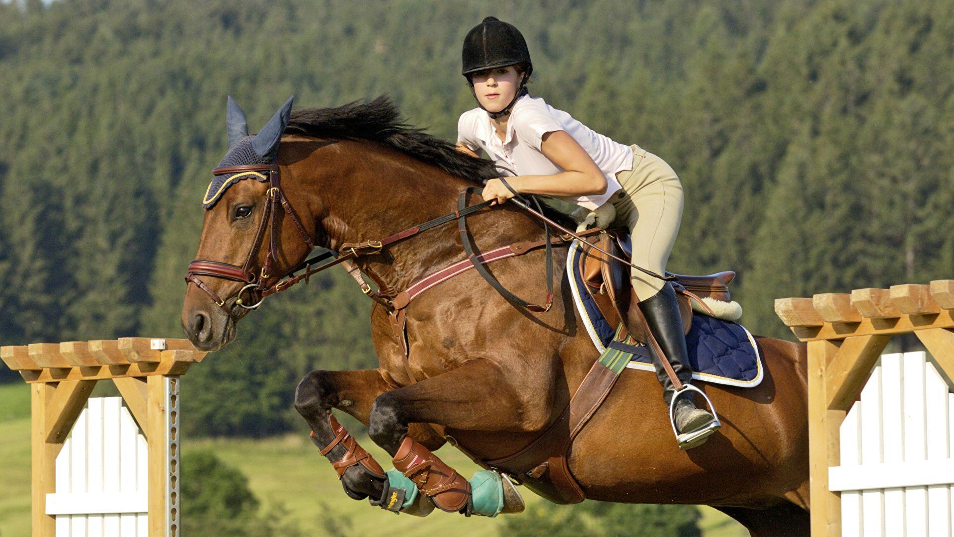 Equestrian download wallpaper image