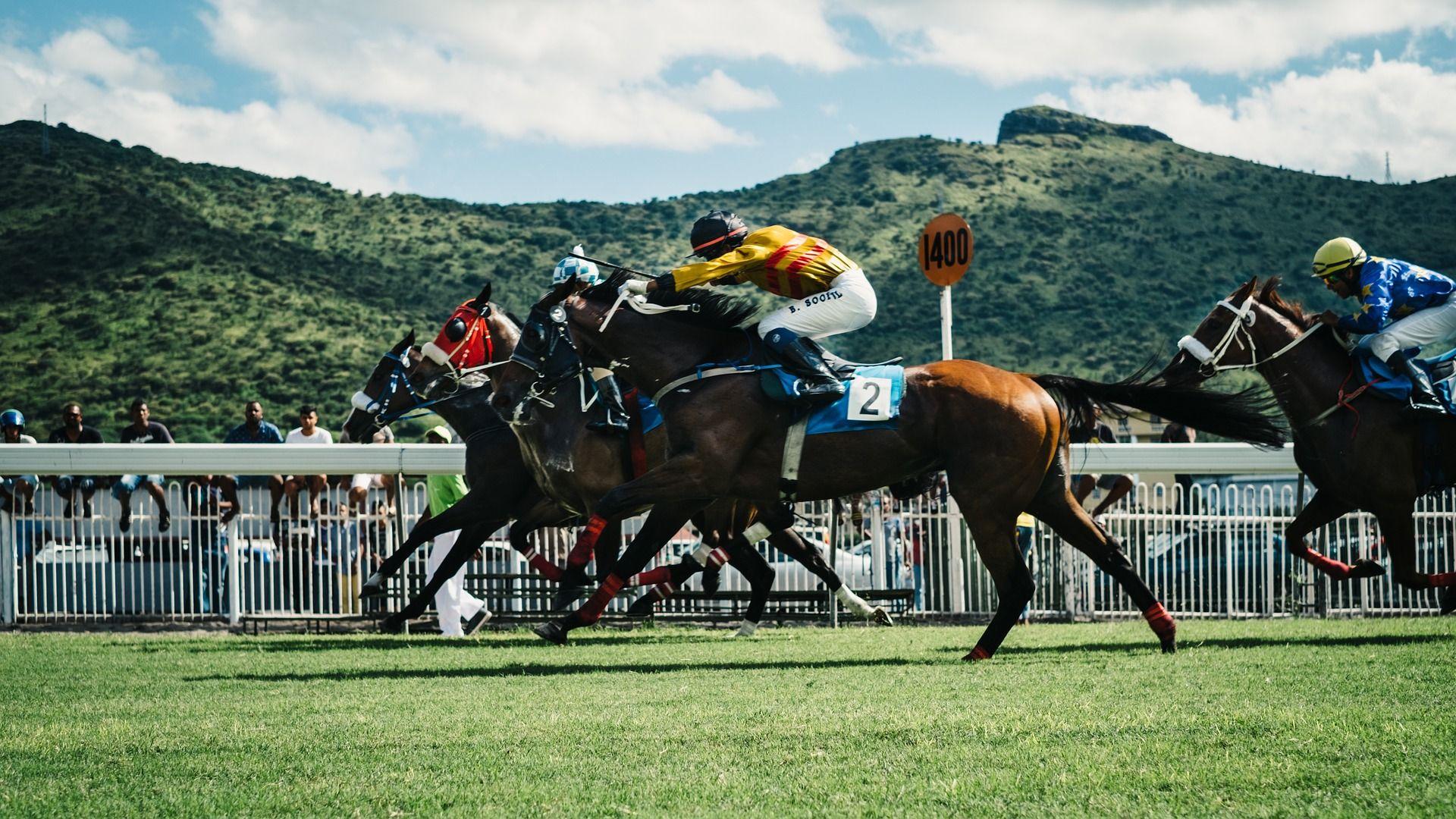Equestrian Free Desktop Wallpaper