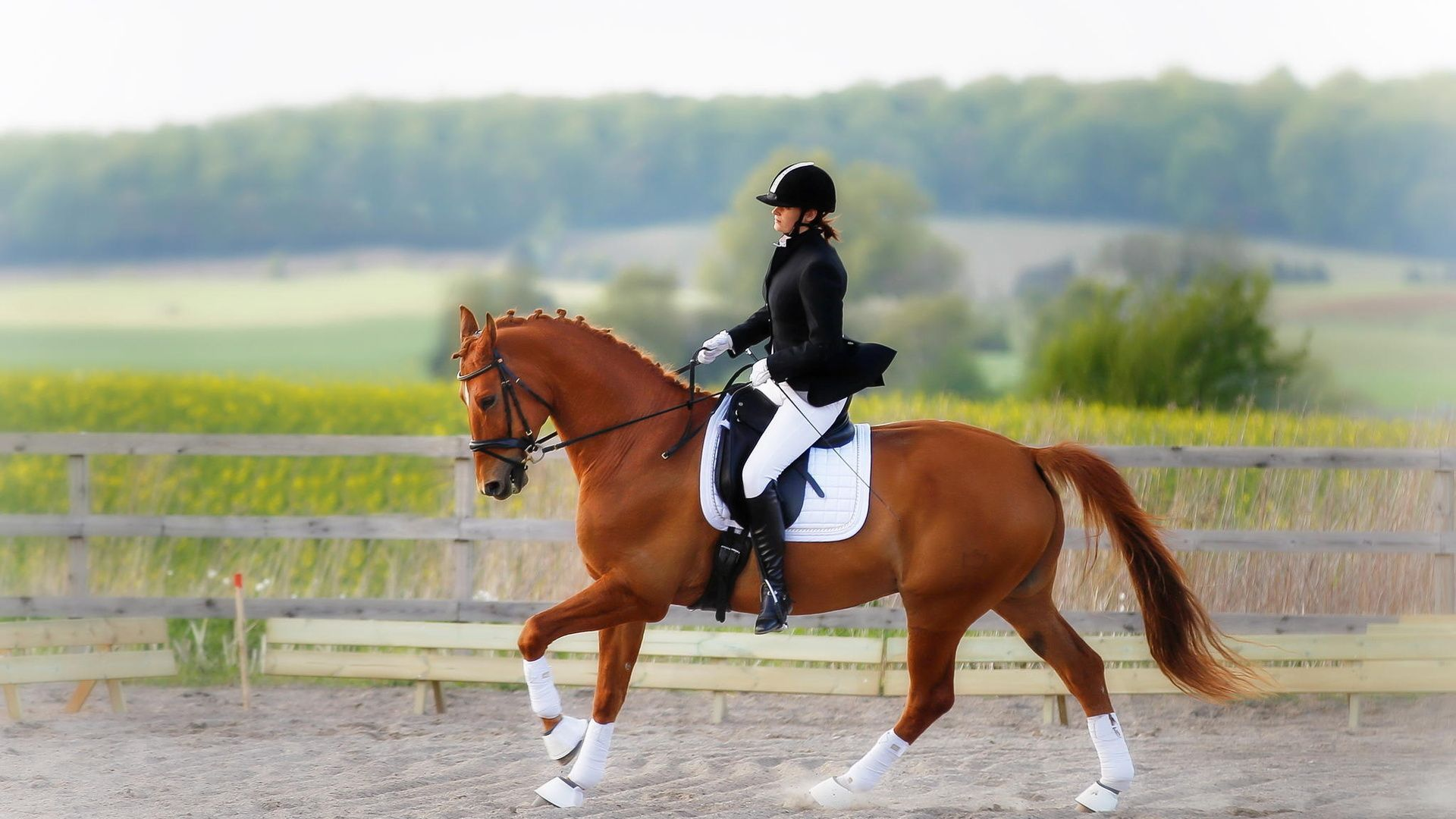 Equestrian wallpaper photo hd