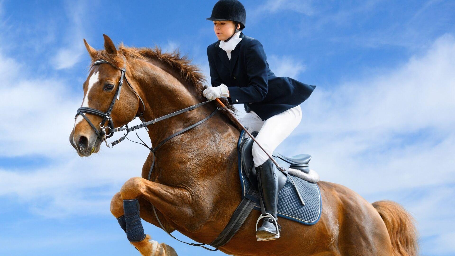 Equestrian beautiful wallpaper