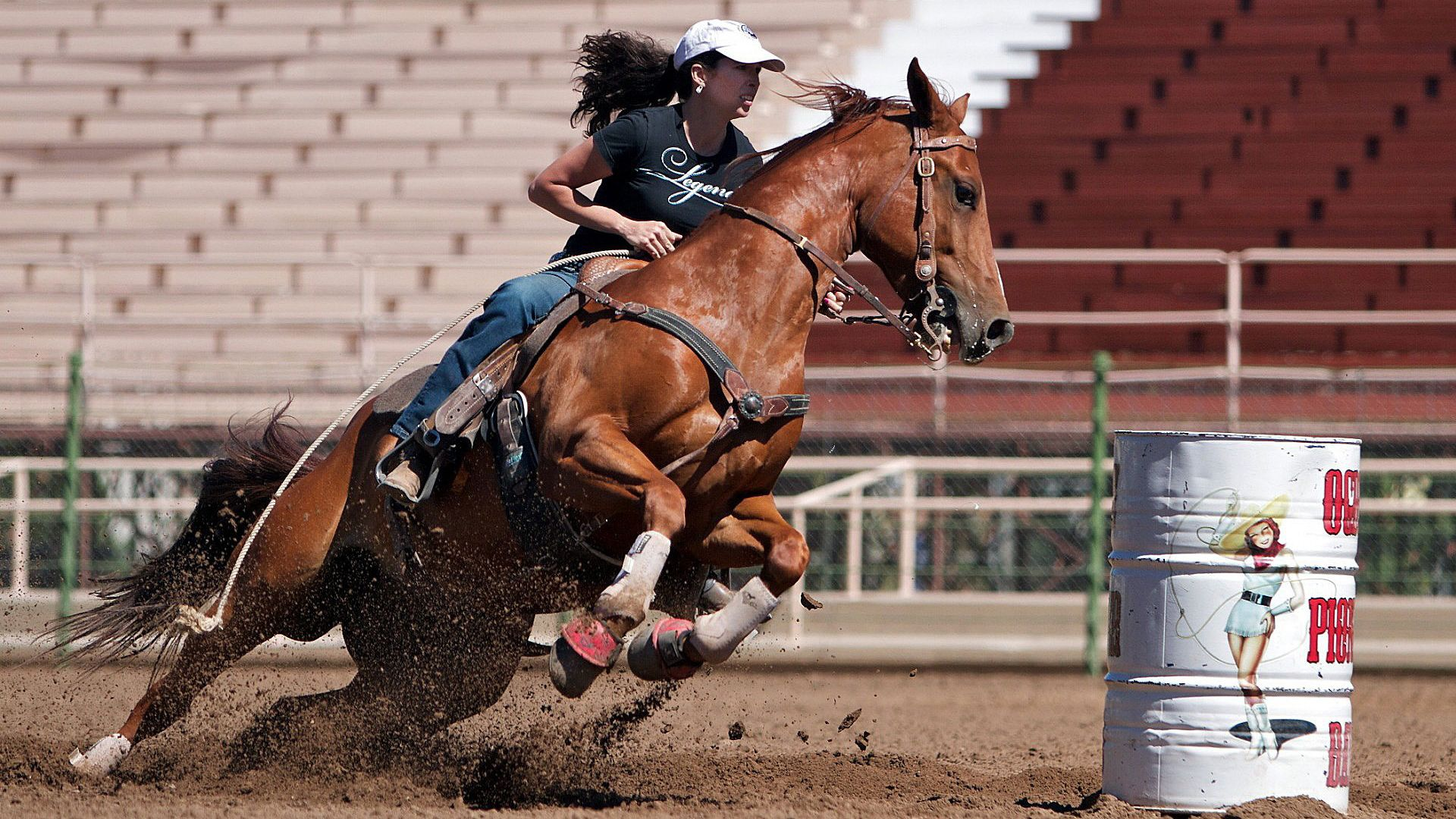 Equestrian vertical wallpaper hd
