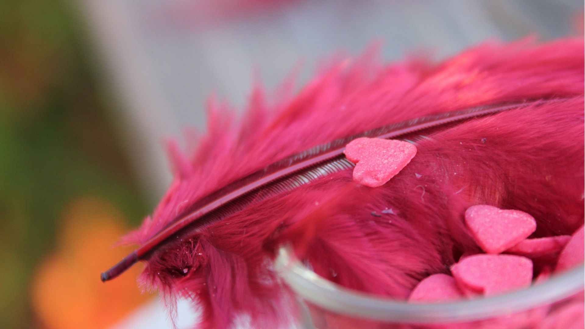 Feather Bloom jpg picture