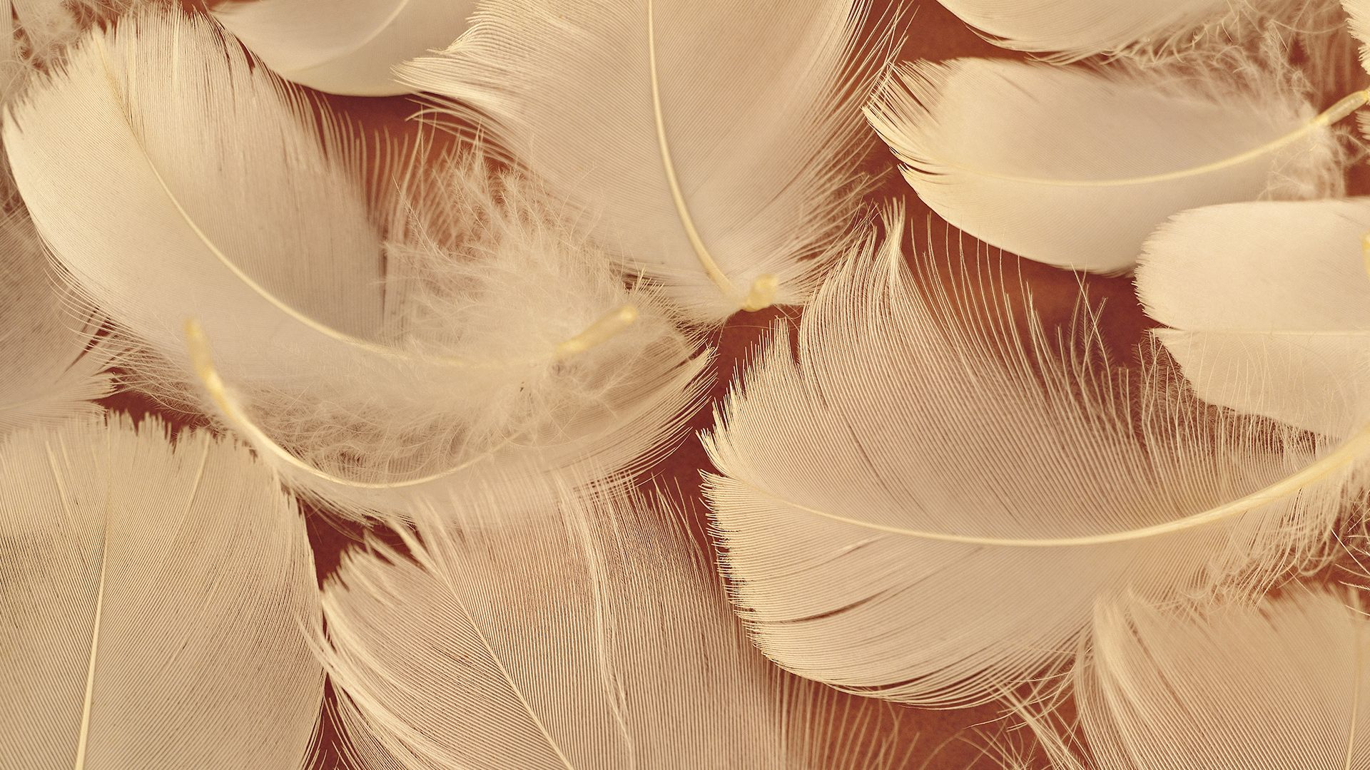 Feather Bloom background computer
