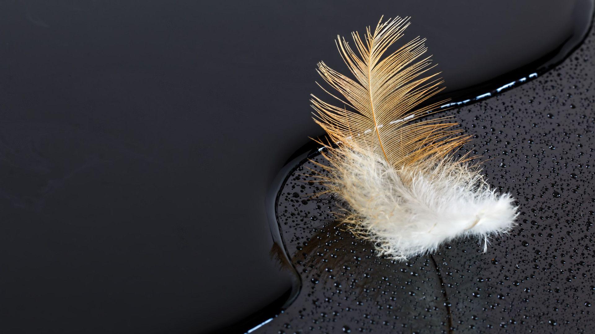 Feather Bloom jpg