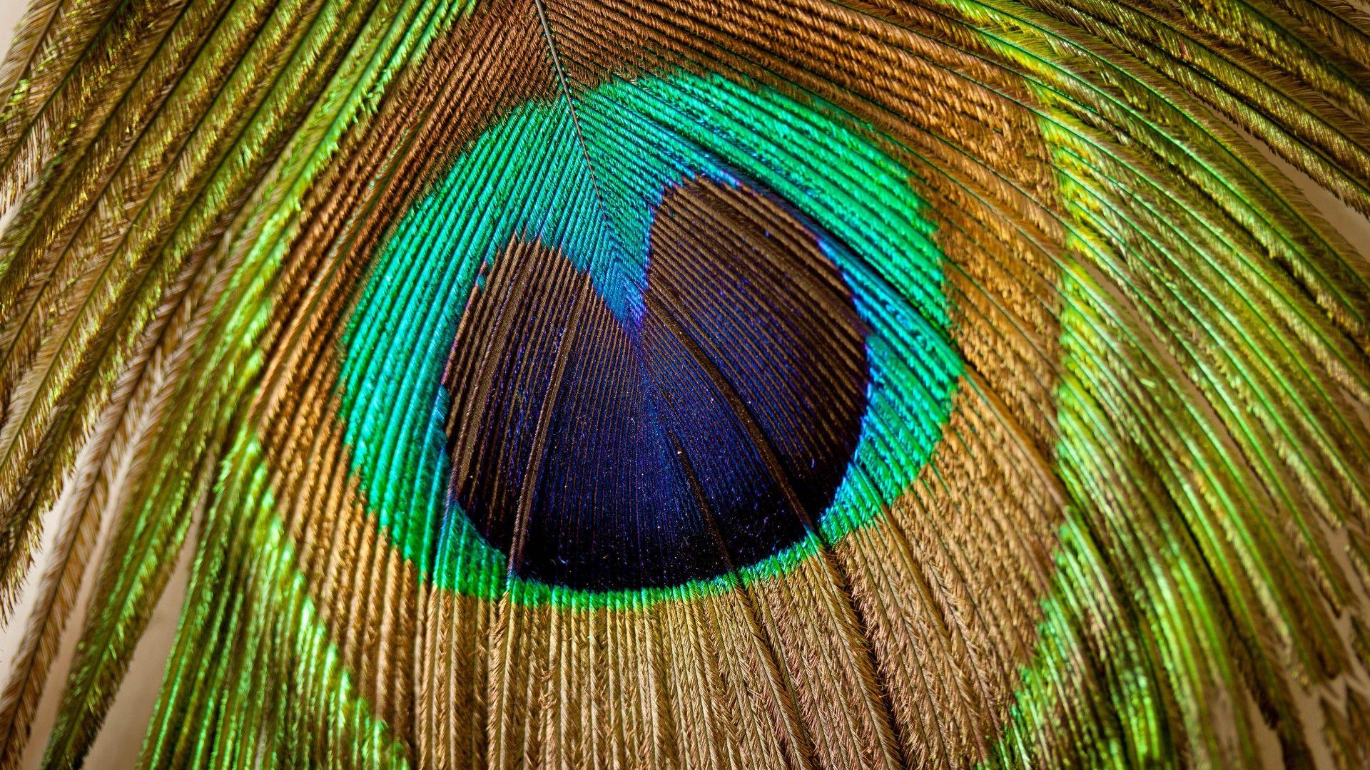 Feather Bloom desktop background free