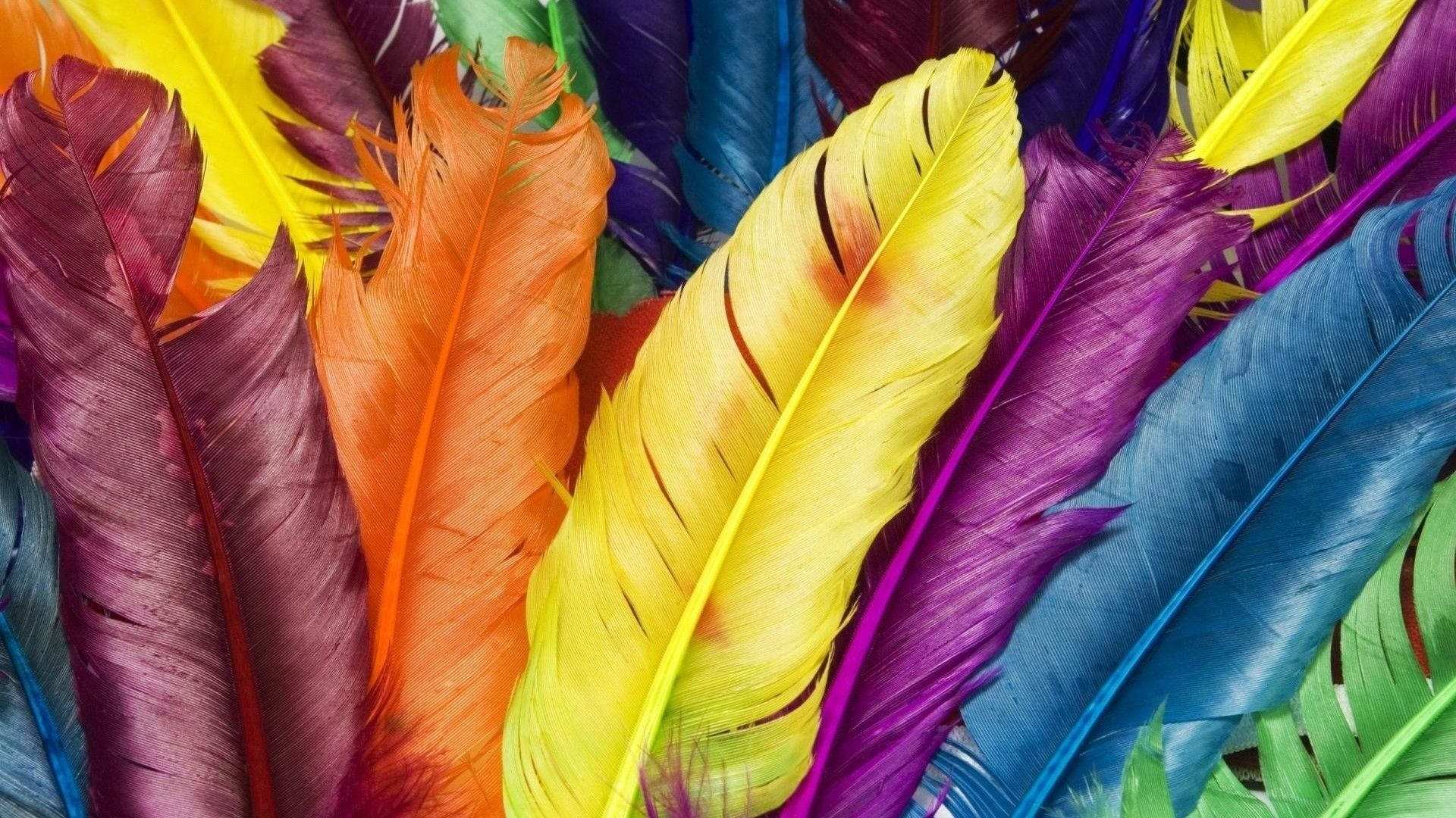 Feather Bloom wallpaper for computer