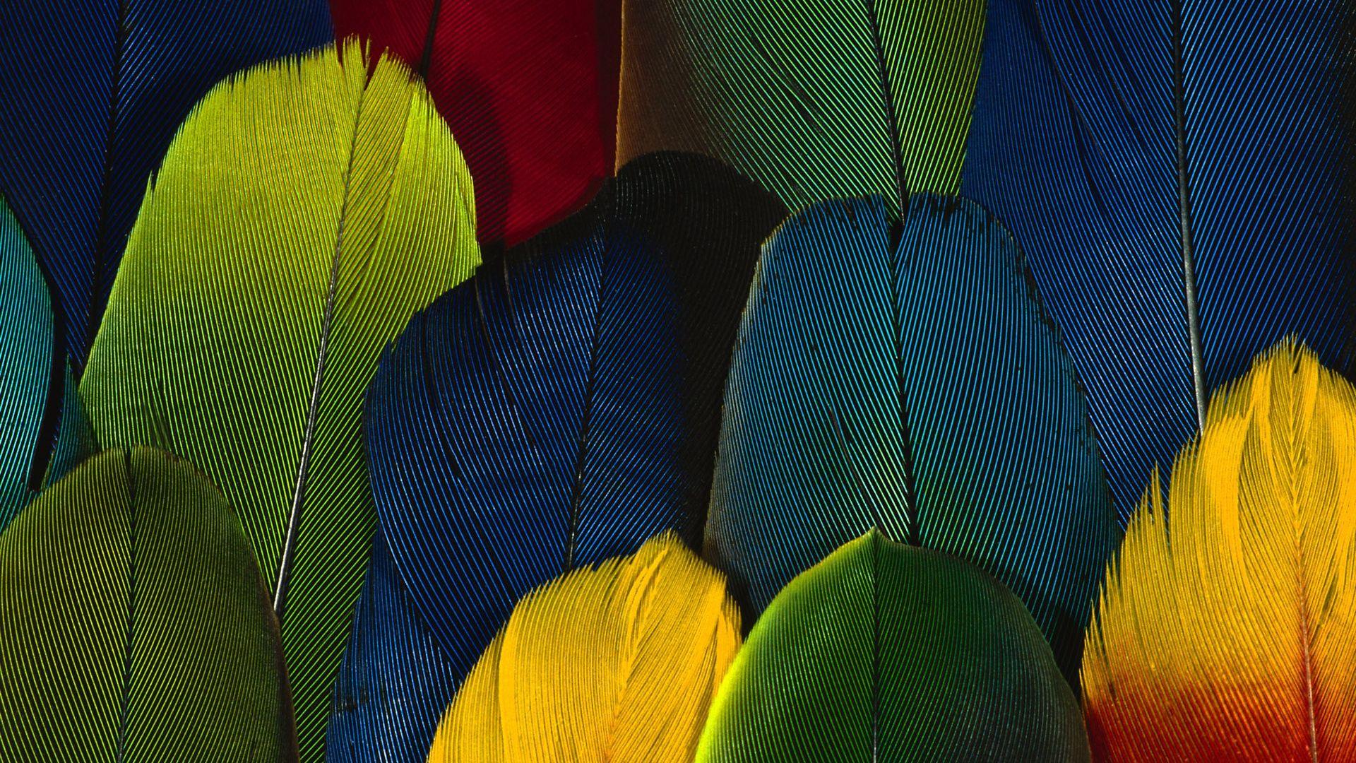Feather Bloom desktop image