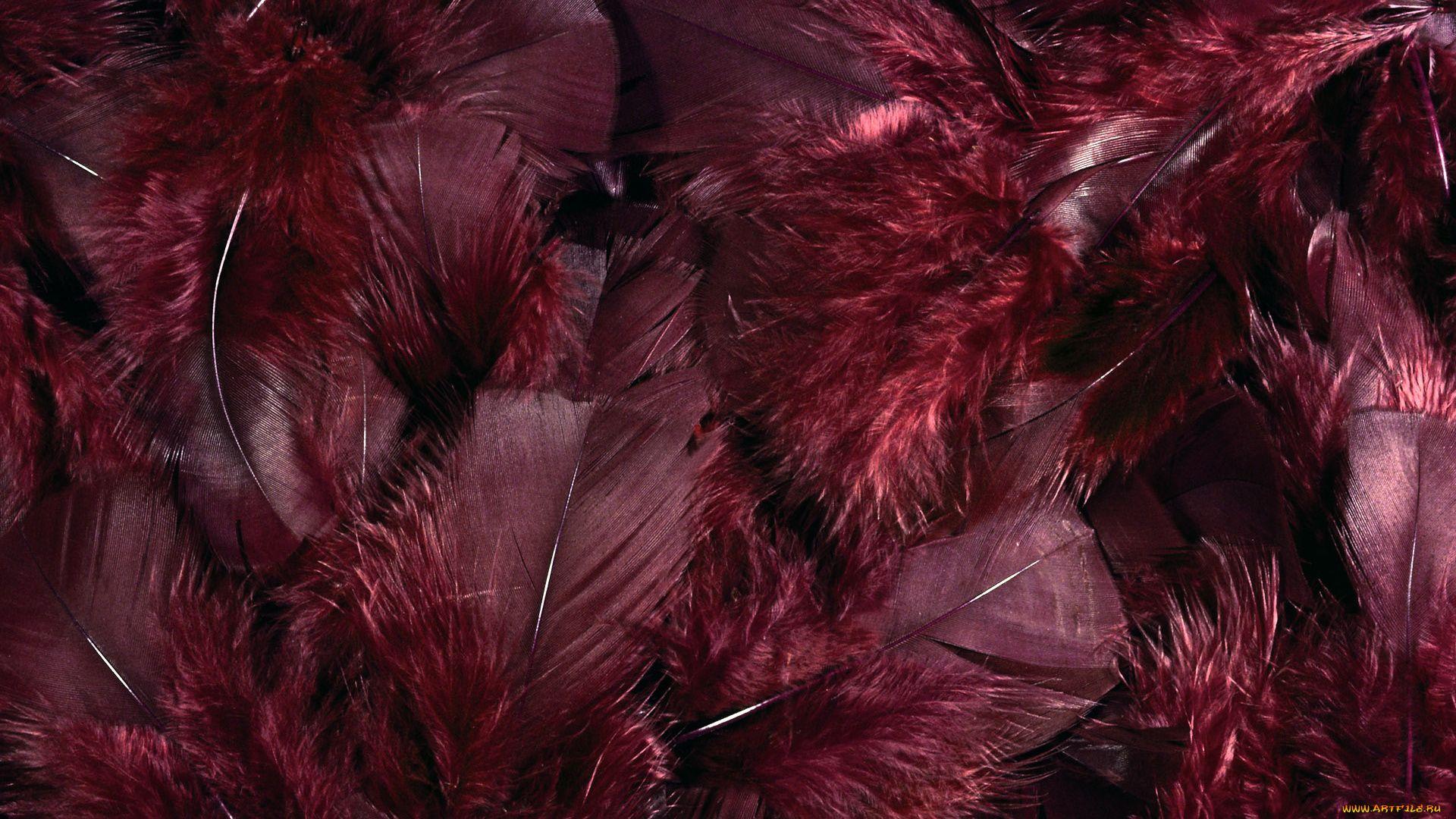 Feather Bloom free wallpaper for desktop