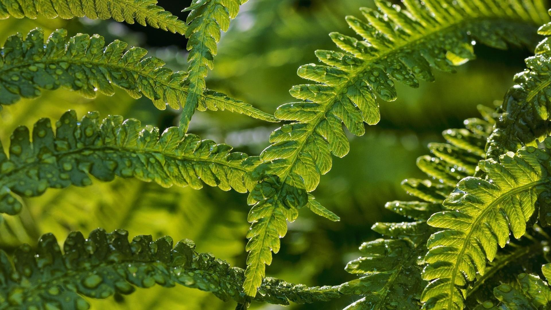 Fern High Quality