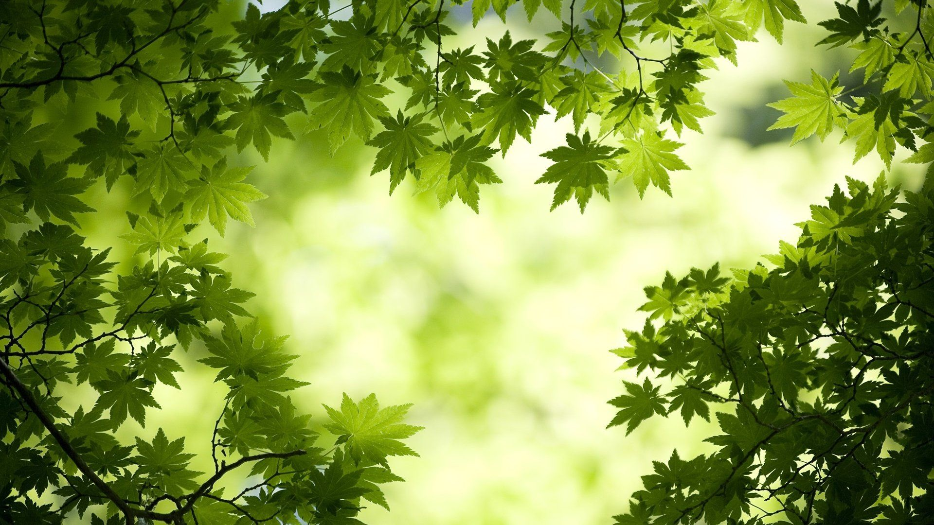Foliage 1920x1080 wallpaper