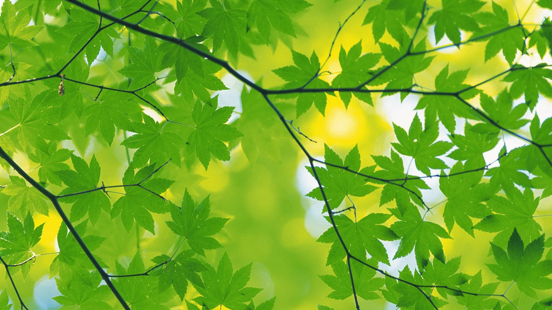Foliage Picture