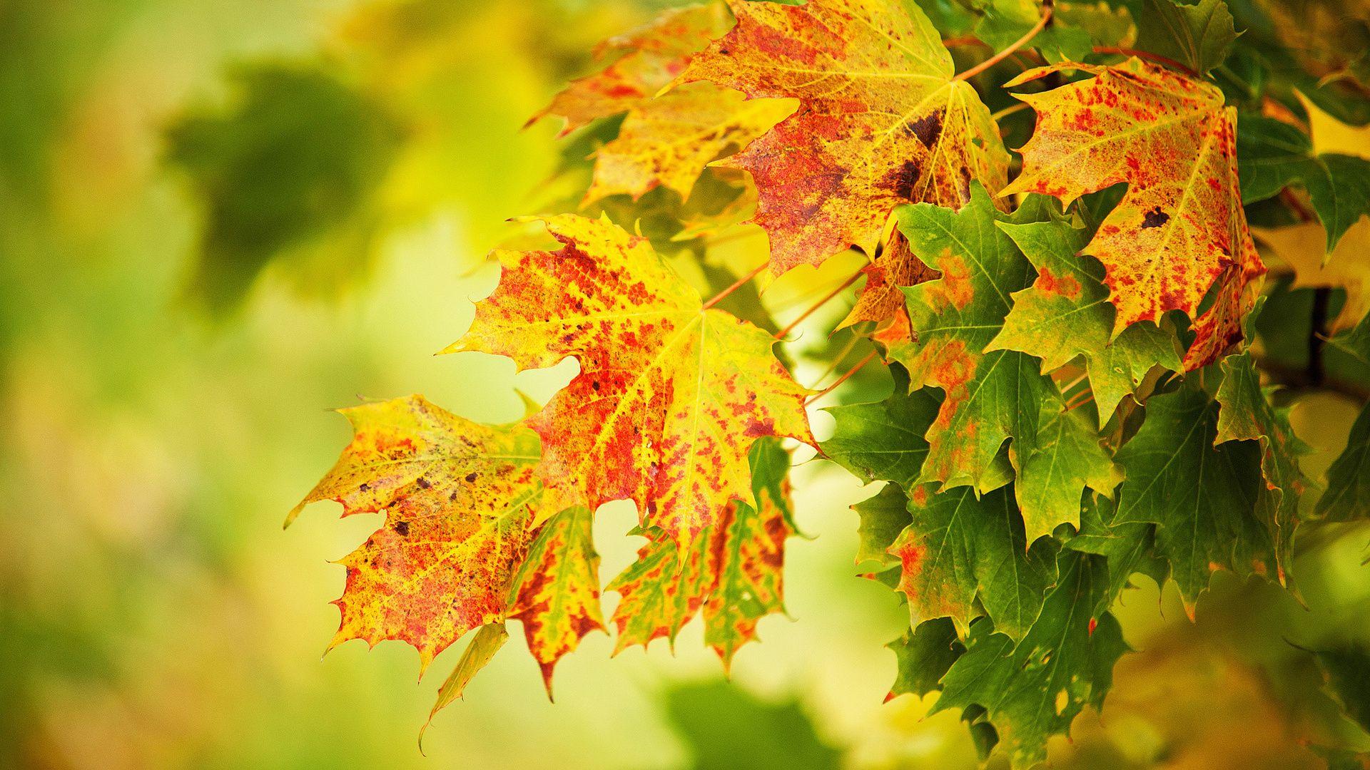 Foliage Full HD Wallpaper
