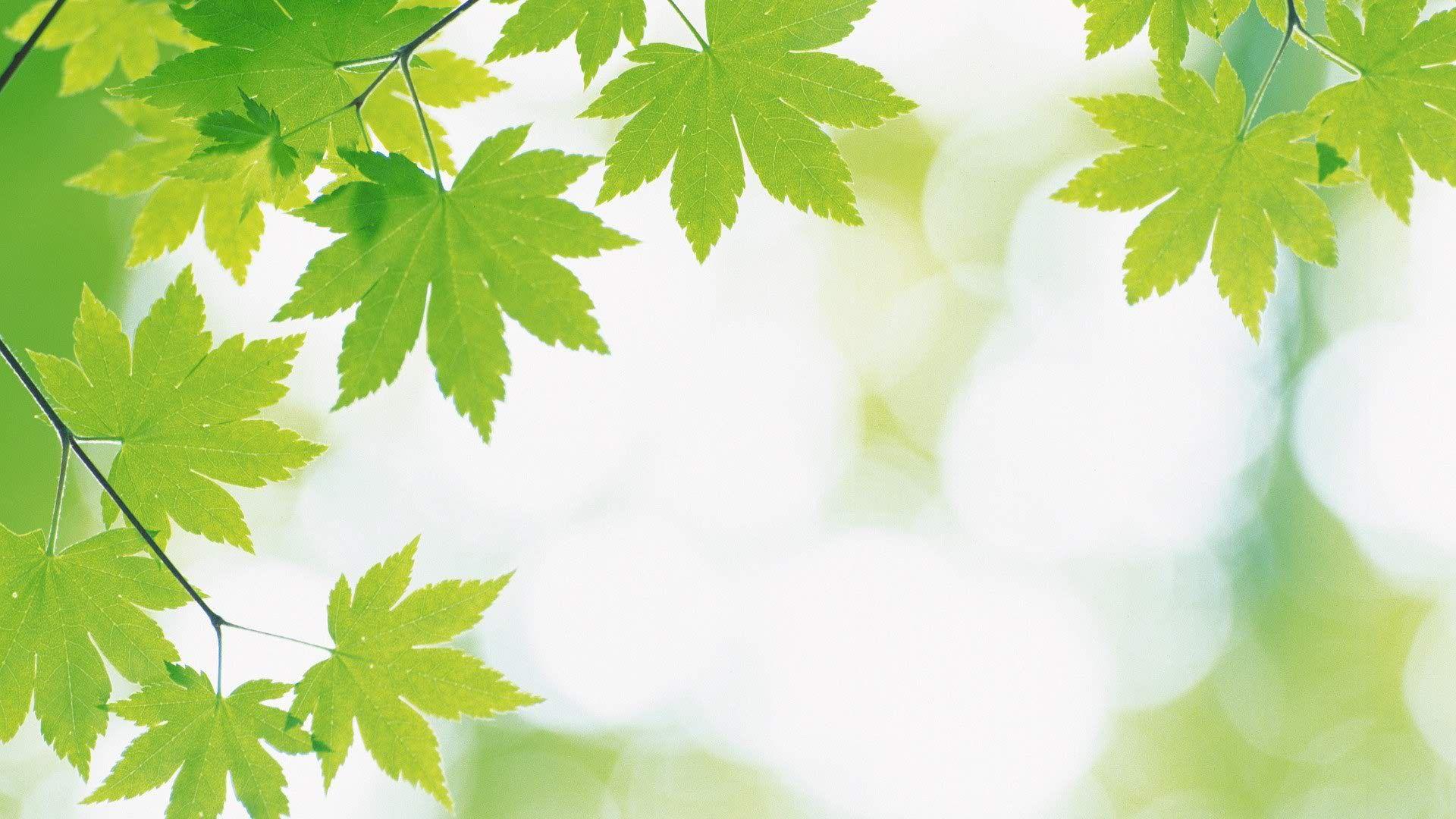 Foliage Free Desktop Wallpaper